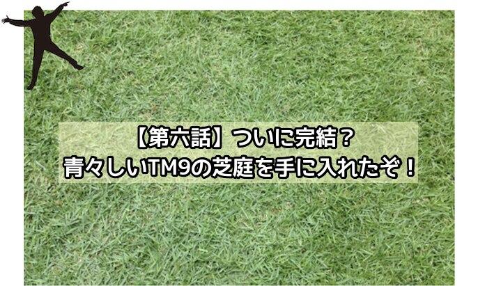 TM9の芝の葉