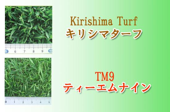 キリシマターフとTM9の葉