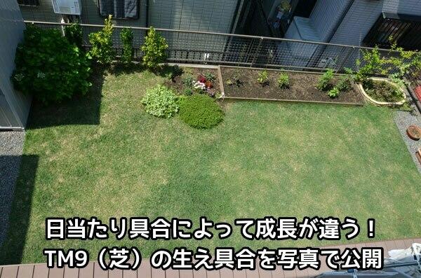 TM9を植えた我が家の庭