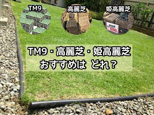 TM9・高麗芝・姫高麗芝どれがおすすめ
