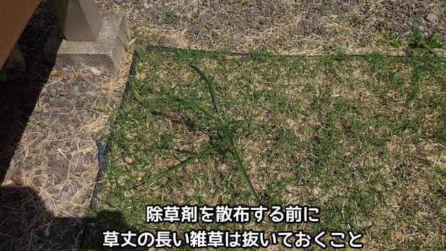 草丈の長い雑草