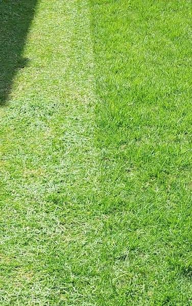 フィールドウッズ手動式芝刈り機 FW-M30Aで刈った芝庭②